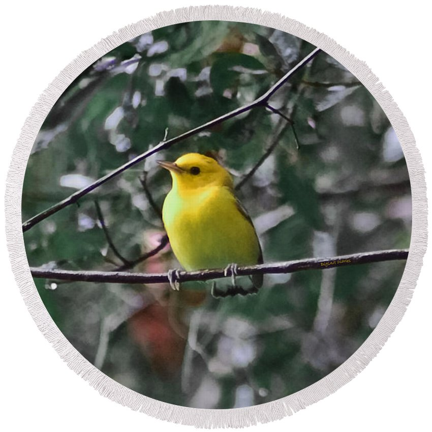 Bird Round Beach Towel featuring the photograph Yellow Songbird by DigiArt Diaries by Vicky B Fuller
