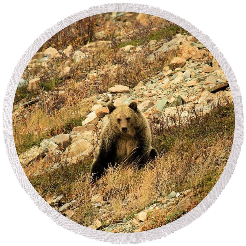 Grizzly Bear Round Beach Towel featuring the photograph You Want My Photo? by Adam Jewell