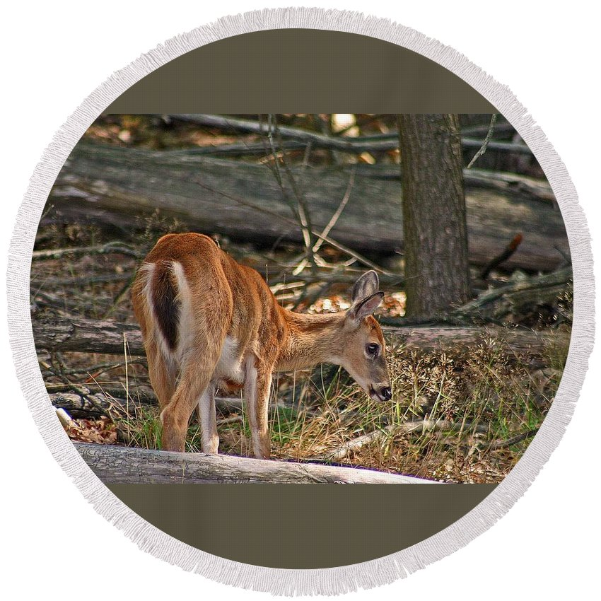 Deer Round Beach Towel featuring the photograph Young Whitetail by David Rucker