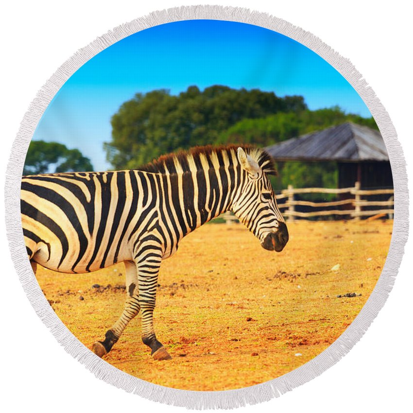Africa Round Beach Towel featuring the photograph Zebra In The Grassland by Nino Rasic