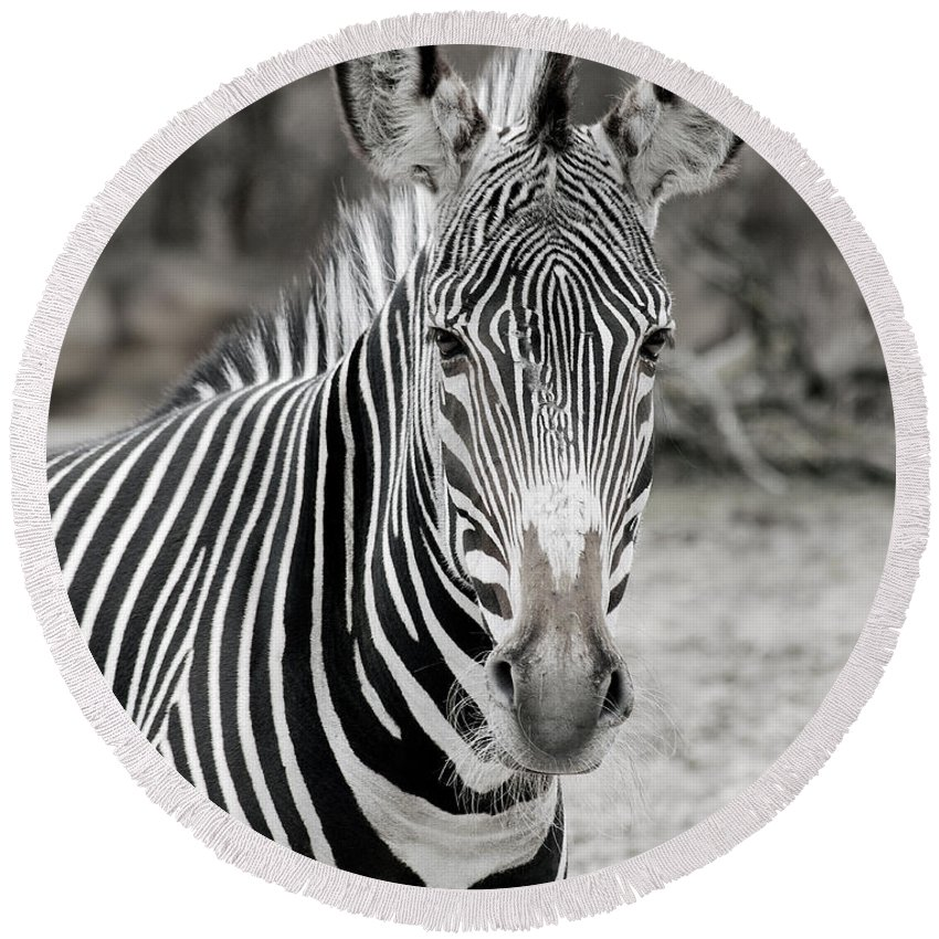 Zebra Round Beach Towel featuring the photograph Zebra by Michael Peychich