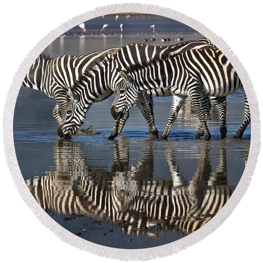 Ngorongoro Crater Round Beach Towel featuring the photograph Zebras Drinking Ngorongoro Crater Tanzania by Boyd Norton