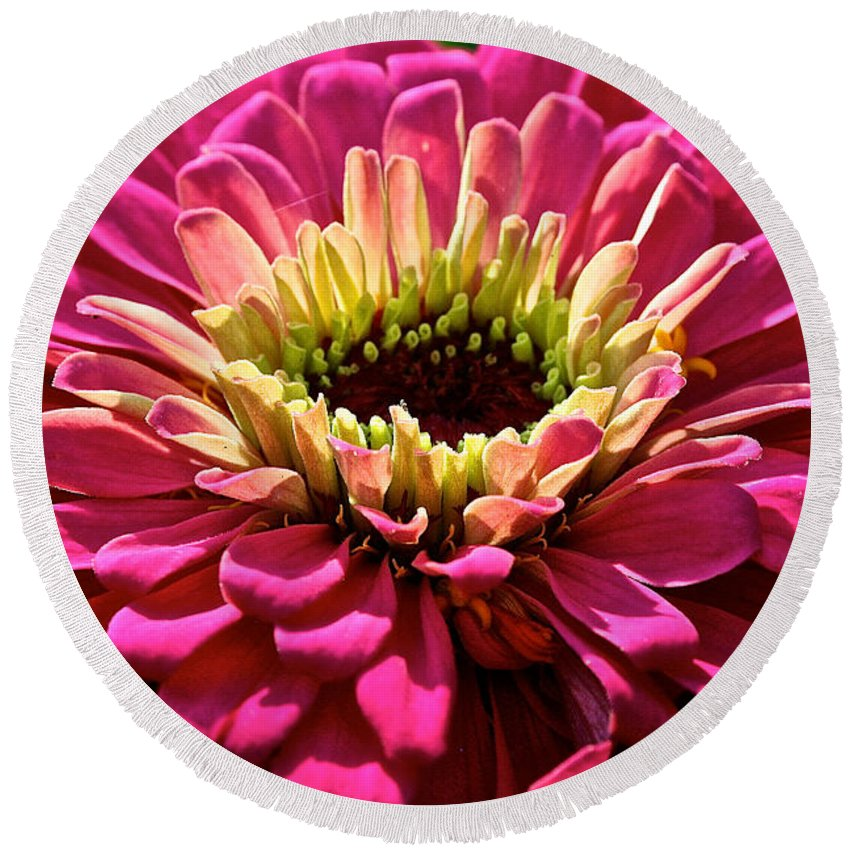 Plant Round Beach Towel featuring the photograph Zinnia Power by Susan Herber