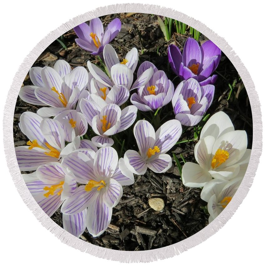 Crocus Round Beach Towel featuring the photograph Find The Ant by Jean Costa