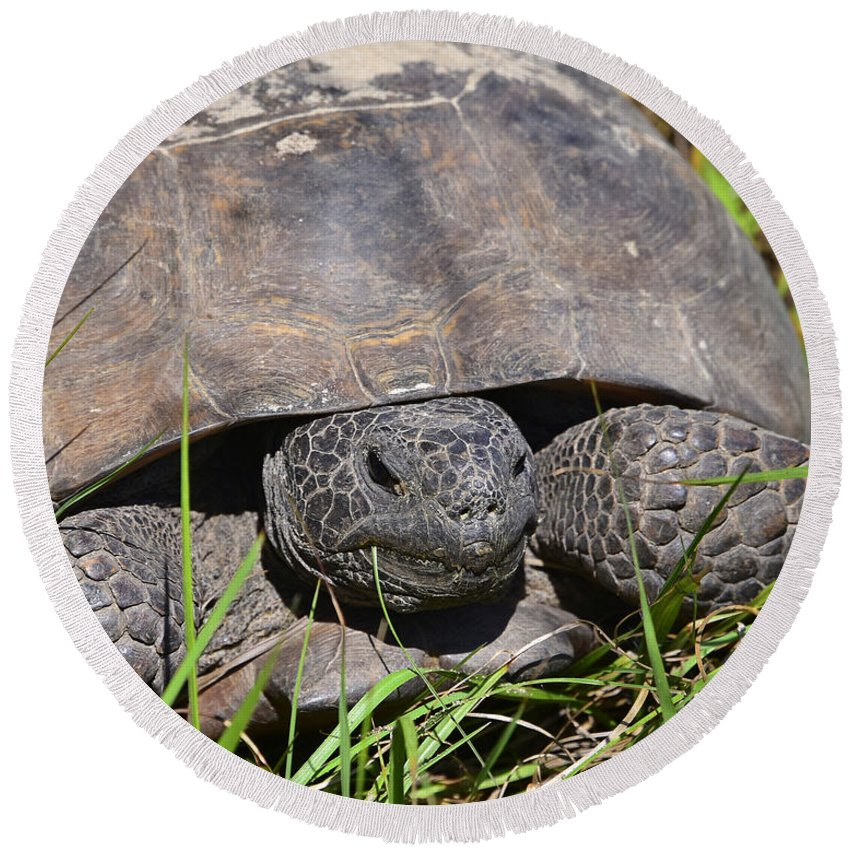 Animals Round Beach Towel featuring the photograph Gopher Tortoise Close Up by Deborah Good