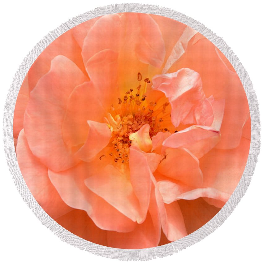 Rose Round Beach Towel featuring the photograph Peachy Perfection by Regina Geoghan