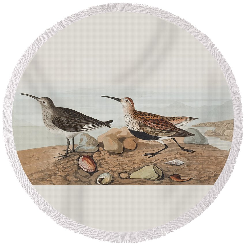 Sandpiper Round Beach Towel featuring the painting Red Backed Sandpiper by John James Audubon