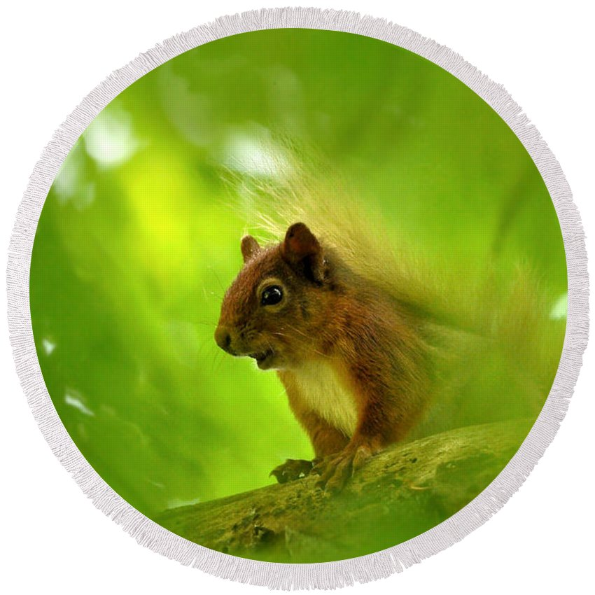 Squirrel Round Beach Towel featuring the photograph Red Squirrel by Gavin Macrae