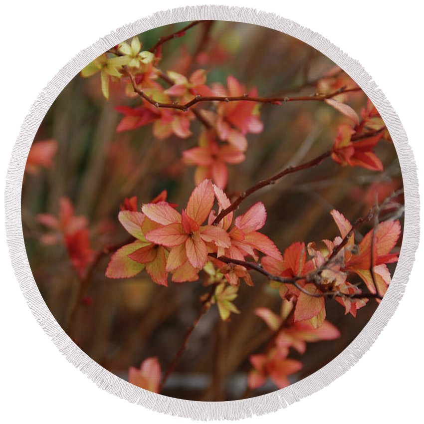 Gardens Round Beach Towel featuring the photograph Spirea 1280 by Guy Whiteley