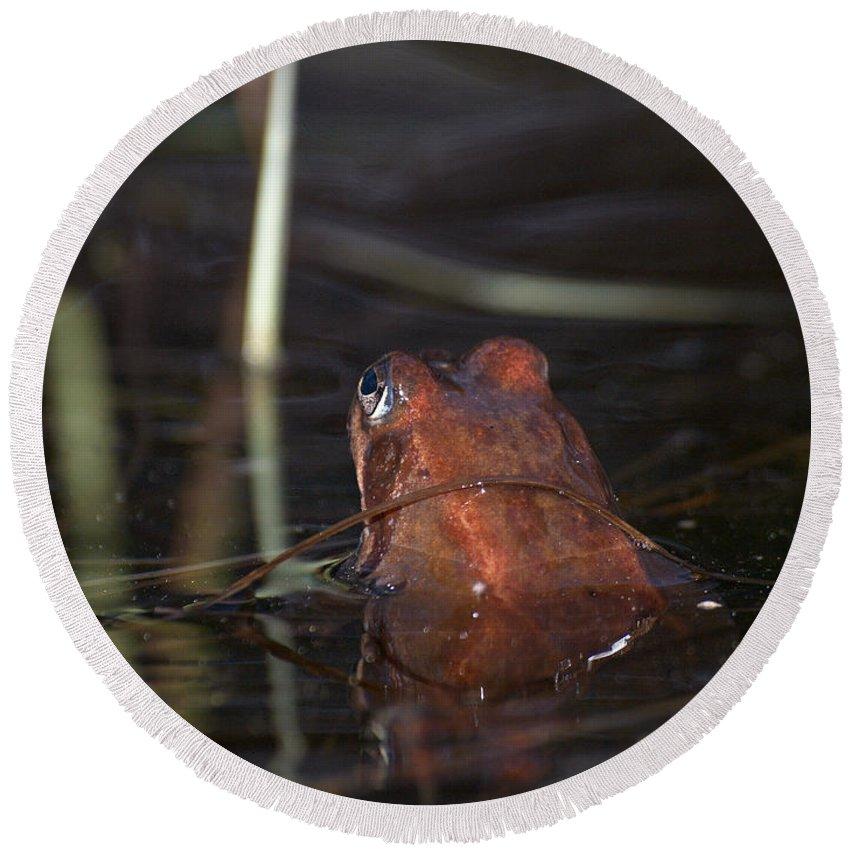 Lehtokukka Round Beach Towel featuring the photograph The Common Frog 2 by Jouko Lehto