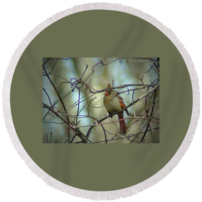 Cardinal Round Beach Towel featuring the photograph 032309-23 by Mike Davis