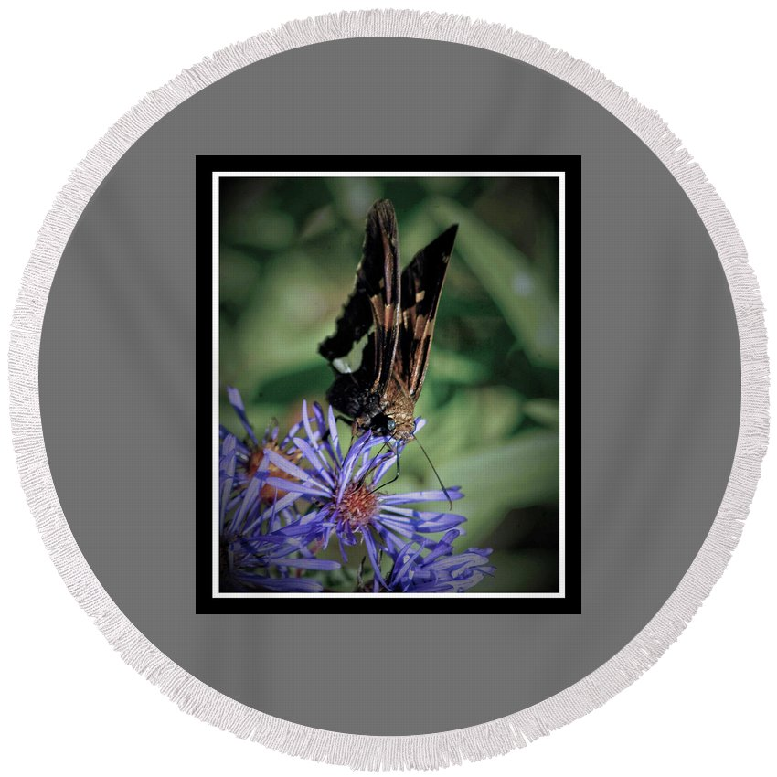 Butterfly Round Beach Towel featuring the photograph 091809-254 by Mike Davis