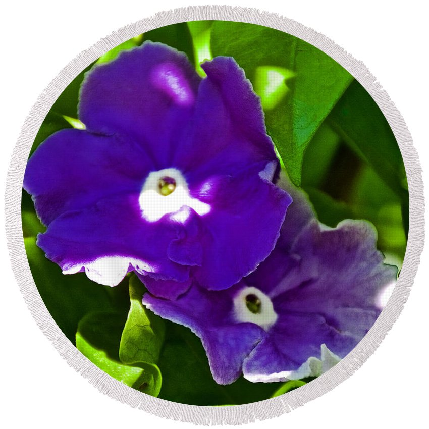 Purple Flowers At Pilgrim Place In Claremont Round Beach Towel featuring the photograph Purple Flowers In Pilgrim Place In Claremont-california by Ruth Hager