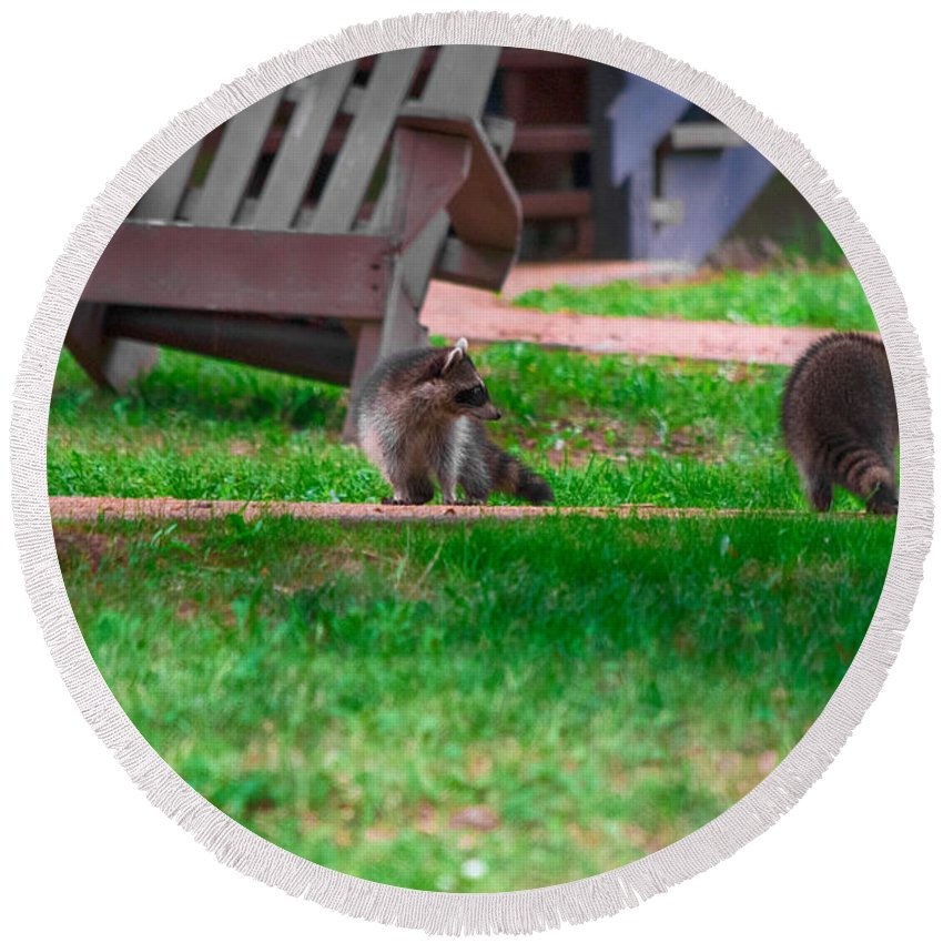 Southern Illinois Round Beach Towel featuring the photograph #01 Raccoon Race by John Diebolt