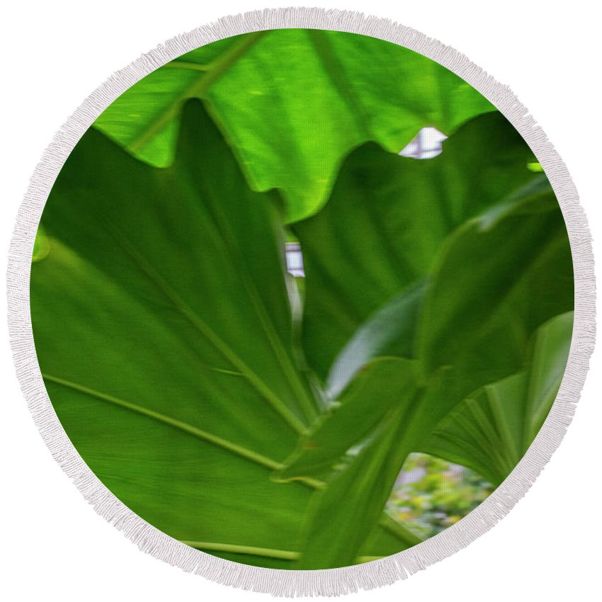 Green Leaves Round Beach Towel featuring the photograph 4327 - Leaves by David Lange