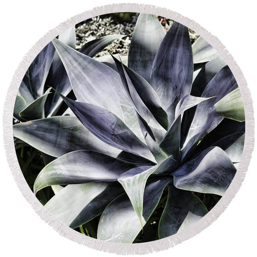 Plant Round Beach Towel featuring the photograph Aloe by Judy Wolinsky