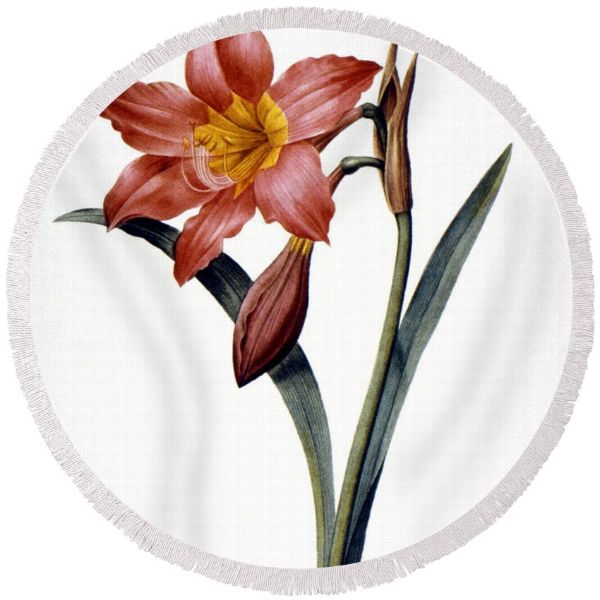 1833 Round Beach Towel featuring the photograph Amaryllis by Granger