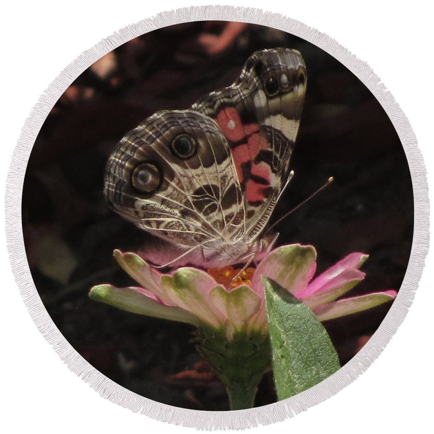 Insect Round Beach Towel featuring the photograph American Painted Lady by Donna Brown