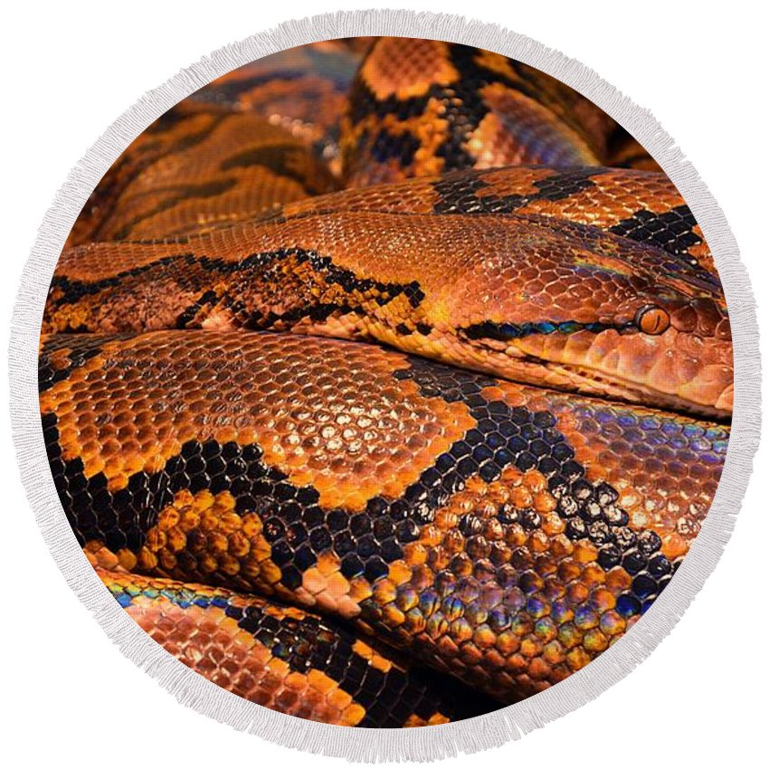 Snake Round Beach Towel featuring the digital art Anaconda by FL collection