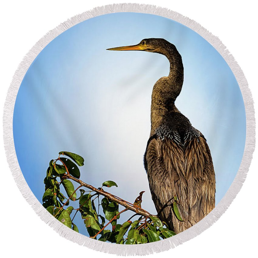 Florida Round Beach Towel featuring the photograph Anhinga by Cyndy Doty