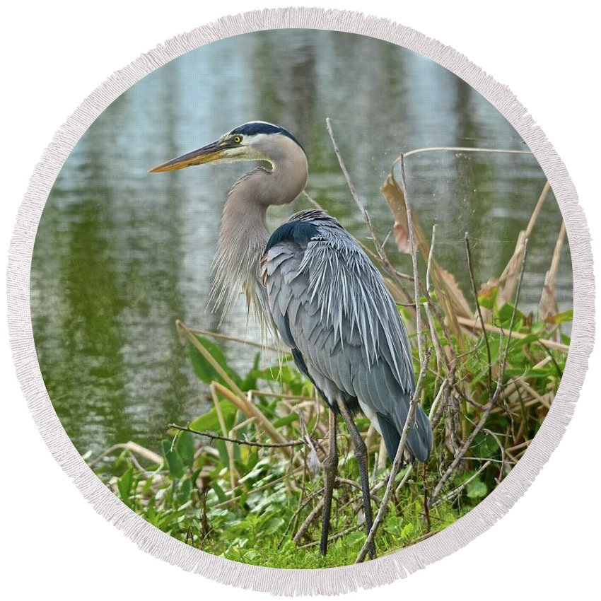 Wetlands Round Beach Towel featuring the photograph At Water's Edge by Carol Bradley