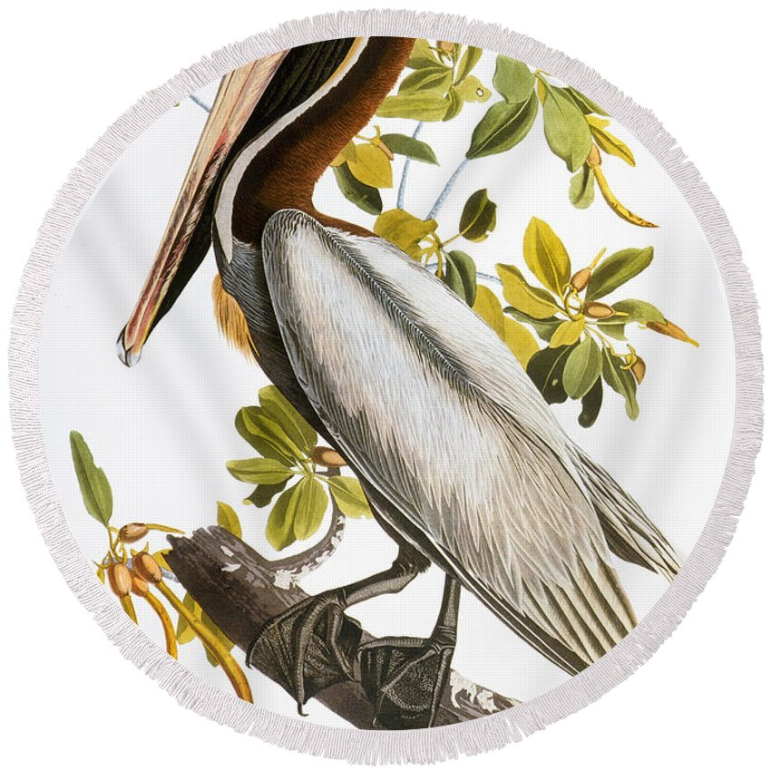 1838 Round Beach Towel featuring the photograph Audubon: Pelican by Granger