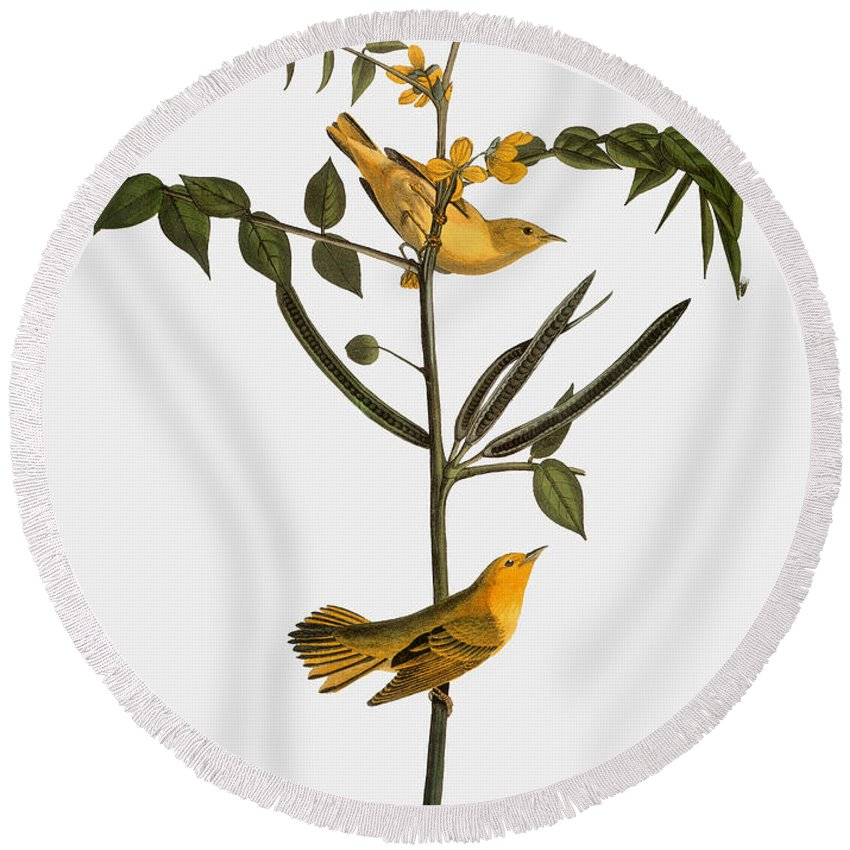 1827 Round Beach Towel featuring the photograph Audubon: Warbler, 1827-38 by Granger