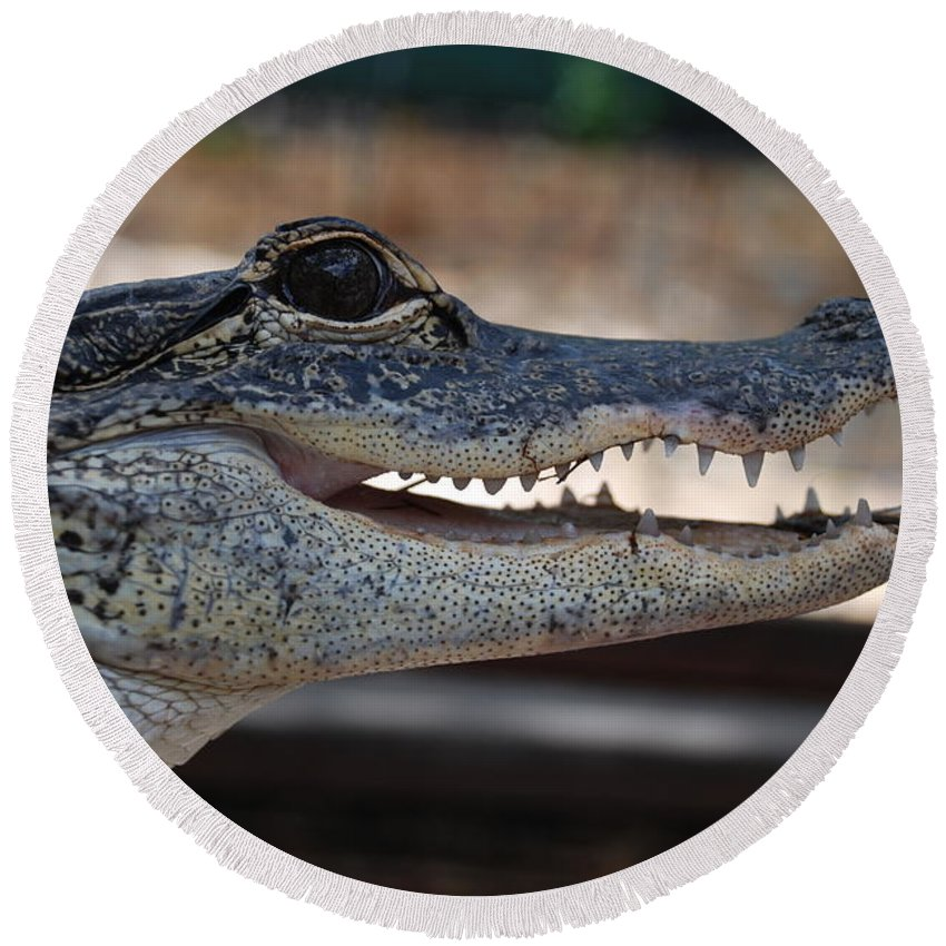 Macro Round Beach Towel featuring the photograph Baby Gator by Rob Hans