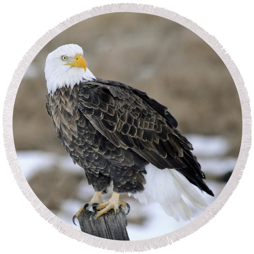 Bald Eagle Round Beach Towel featuring the photograph Bald Eagle by Gary Beeler