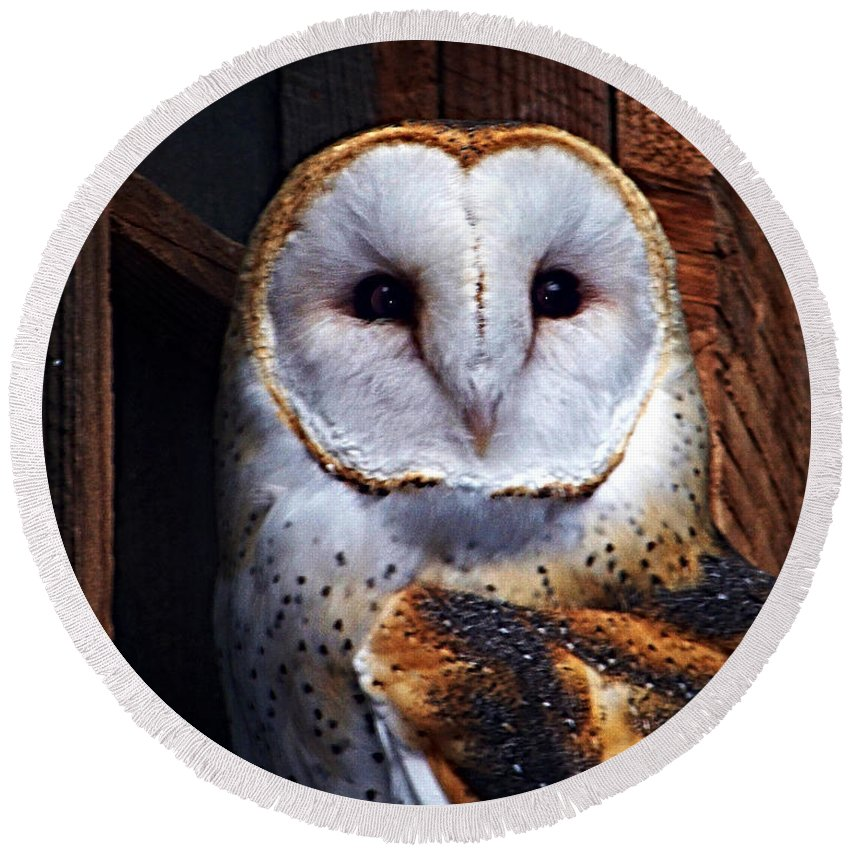 Digital Painting Round Beach Towel featuring the photograph Barn Owl by Anthony Jones