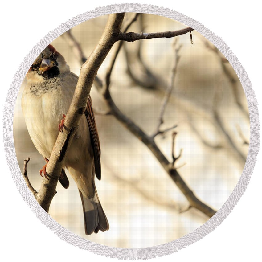 Animal Round Beach Towel featuring the photograph Bird On A Limb by Travis Rogers