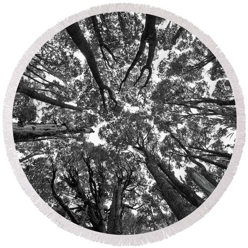Black White Nature Tree Detail Patagonia Round Beach Towel featuring the photograph Black And White Nature Detail by Rodrigo Kaspary