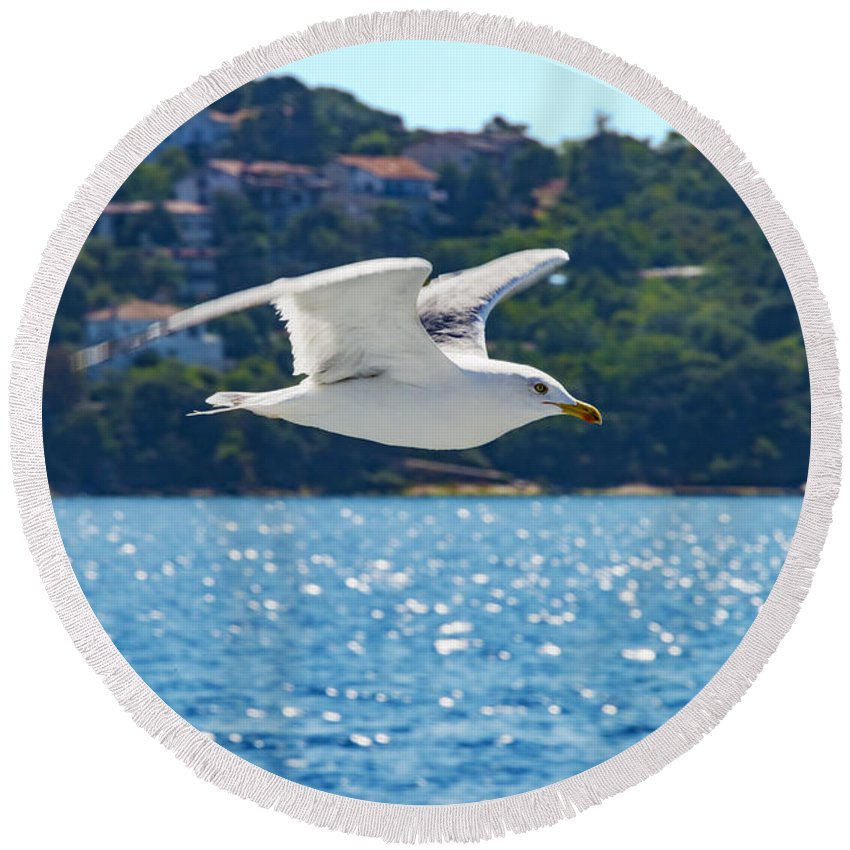 Istanbul Turkey Black-backed Gull Gulls Seagull Seagulls Bird Birds Animal Animals Creature Creature Marmara Sea Seas Water Waterscape Waterscape Round Beach Towel featuring the photograph Black-backed Gull by Bob Phillips
