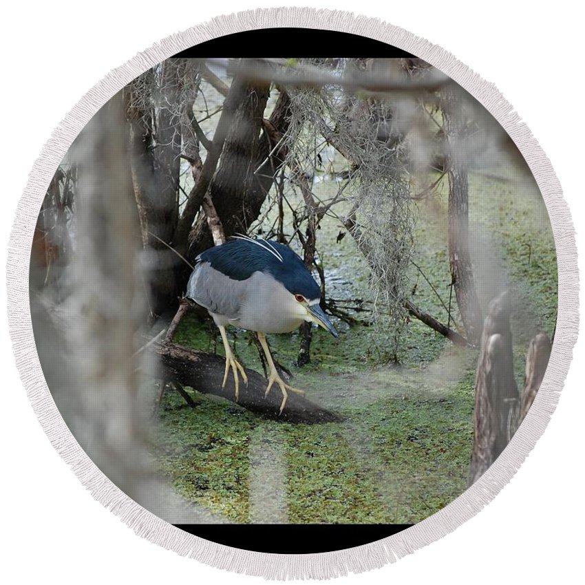 Heron Round Beach Towel featuring the photograph Black Crowned Night Heron by Robert Meanor