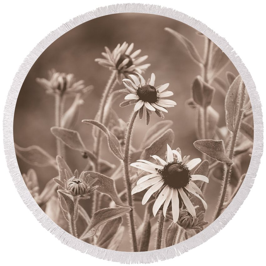 Black Eyed Susans Round Beach Towel featuring the photograph Black-eyed Susans by Mel Hensley