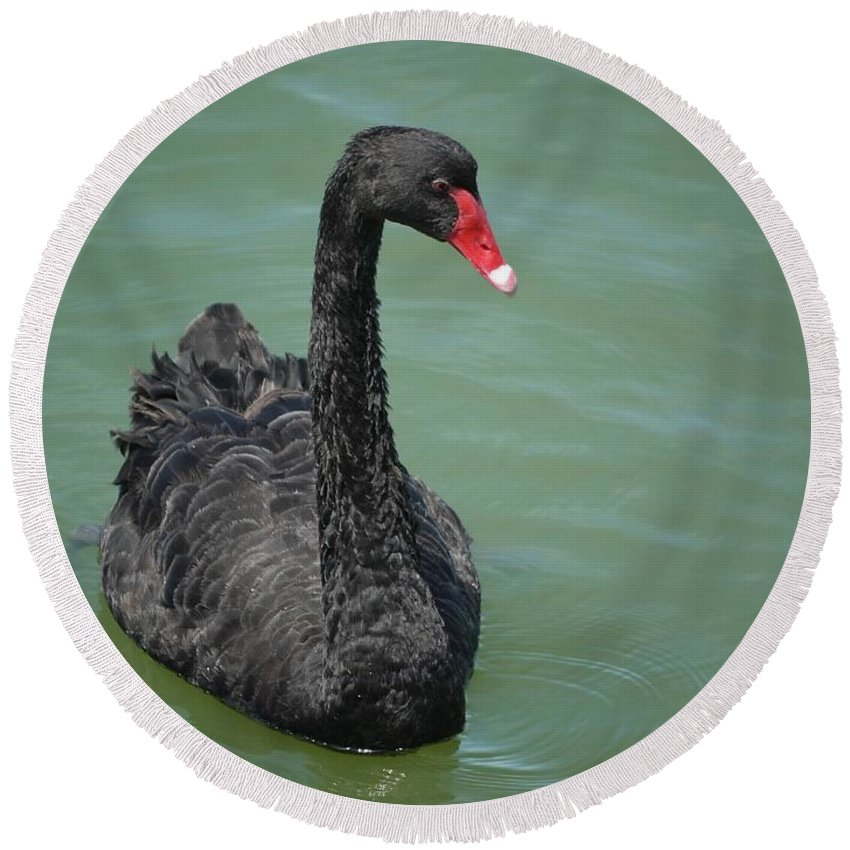 Swan Round Beach Towel featuring the photograph Black Swan by FL collection