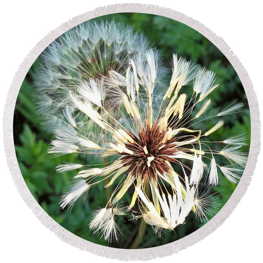 Dandelions Round Beach Towel featuring the photograph Blown Wishes 2 by Zully Bartley
