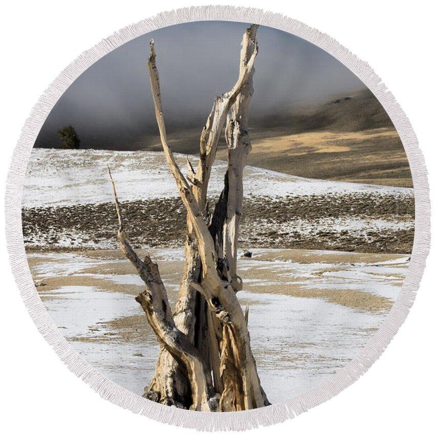 Bristlecone Round Beach Towel featuring the photograph Bristlecone Fog And Sierra Nevada 1 by Bob Neiman