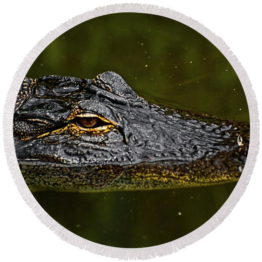 Alligator. Gator Round Beach Towel featuring the photograph Brown Eye by Christopher Holmes