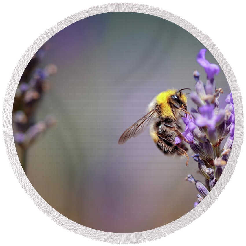 Lavender Round Beach Towel featuring the photograph Bumblebee And Lavender by Nailia Schwarz