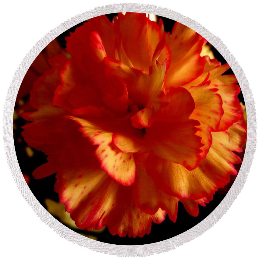 Patzer Round Beach Towel featuring the photograph Carnation by Greg Patzer