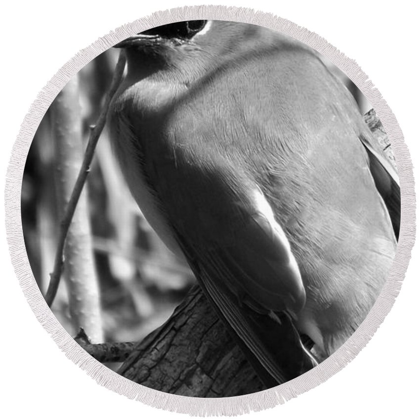 Black & White Round Beach Towel featuring the photograph Cedar Waxwing by Sara Raber