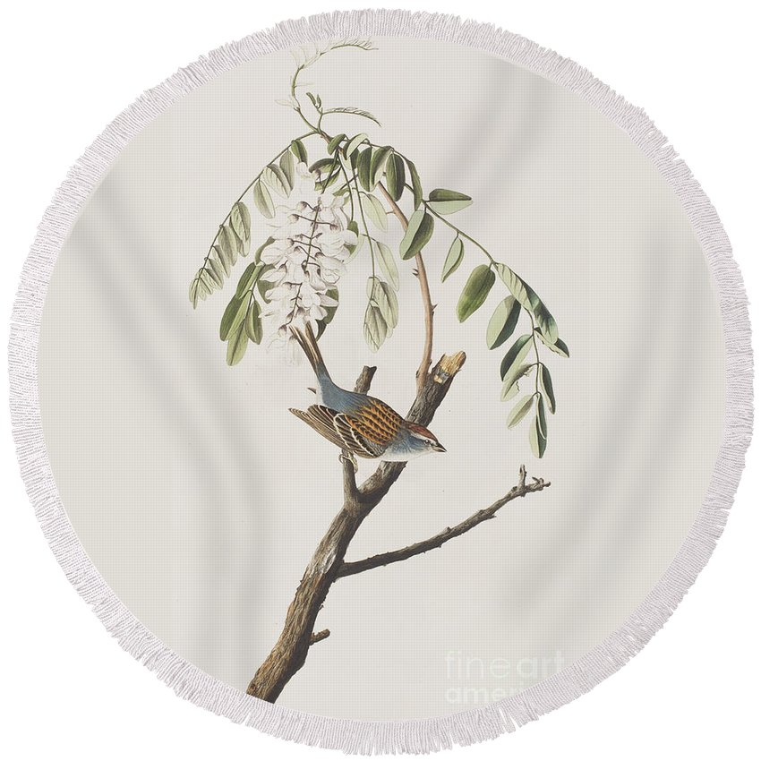 Sparrow Round Beach Towel featuring the painting Chipping Sparrow by John James Audubon