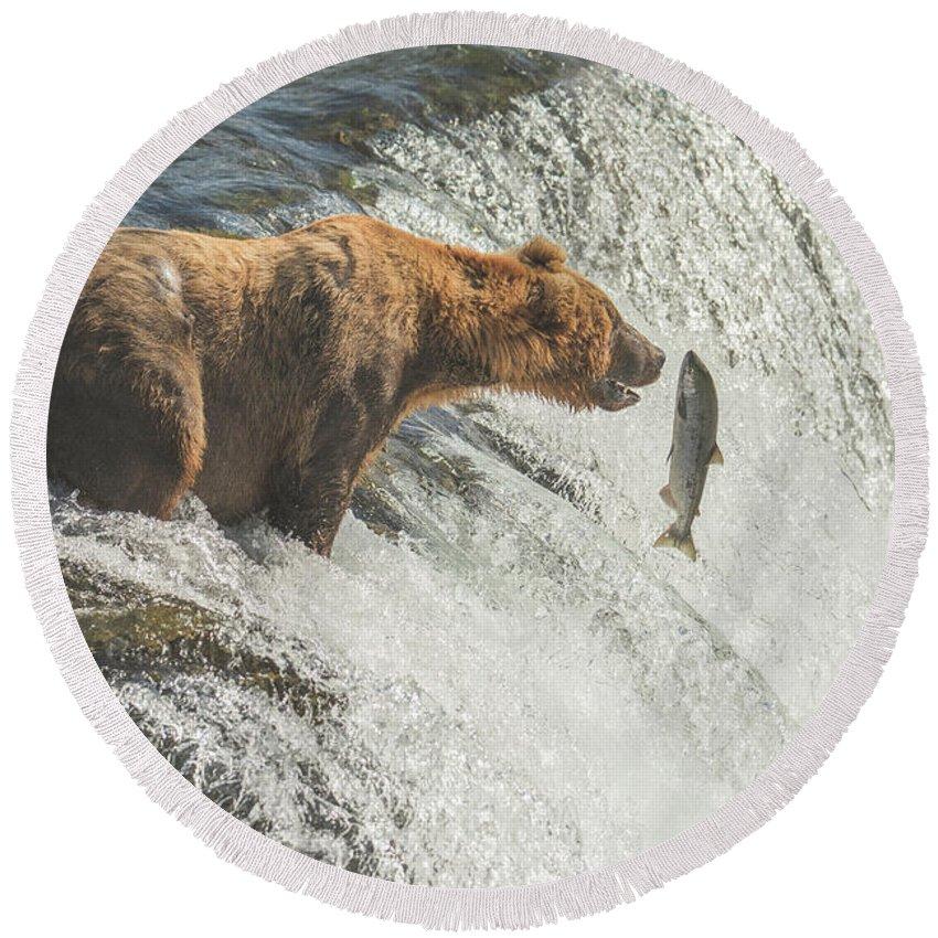 Bear Round Beach Towel featuring the photograph Close Encounter by Jim Chamberlain