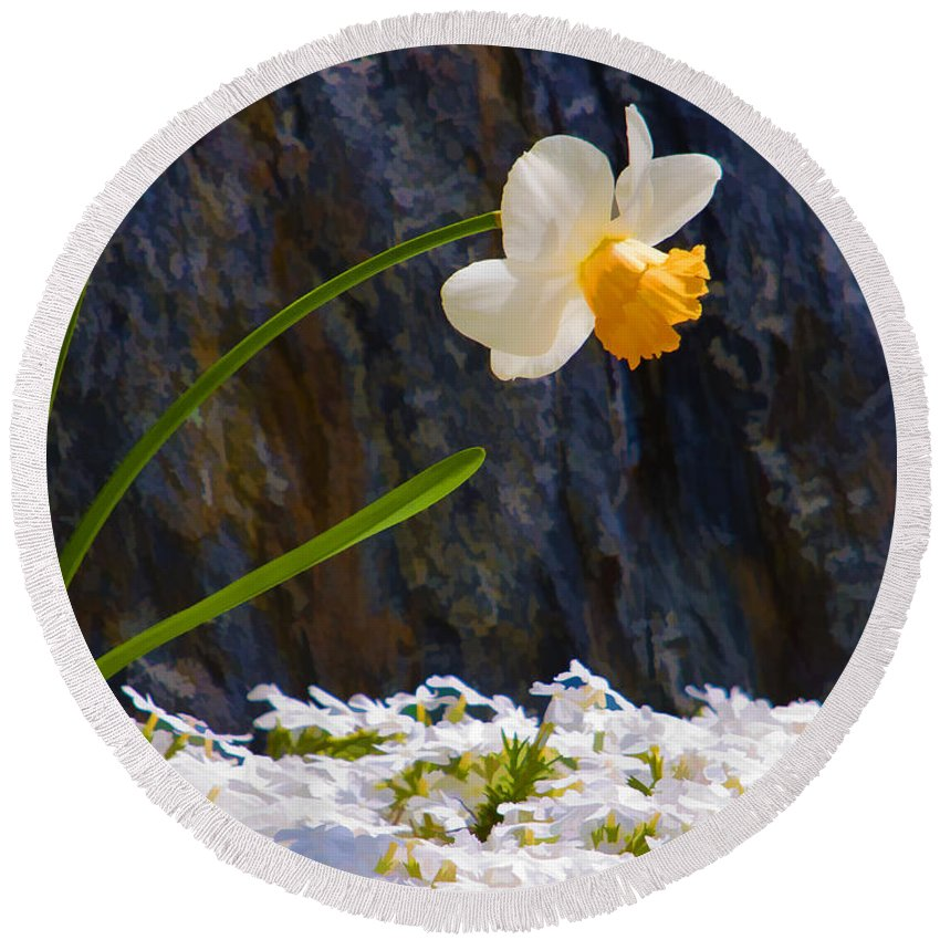 Daffodil Round Beach Towel featuring the photograph Daffodil by Mike Nellums