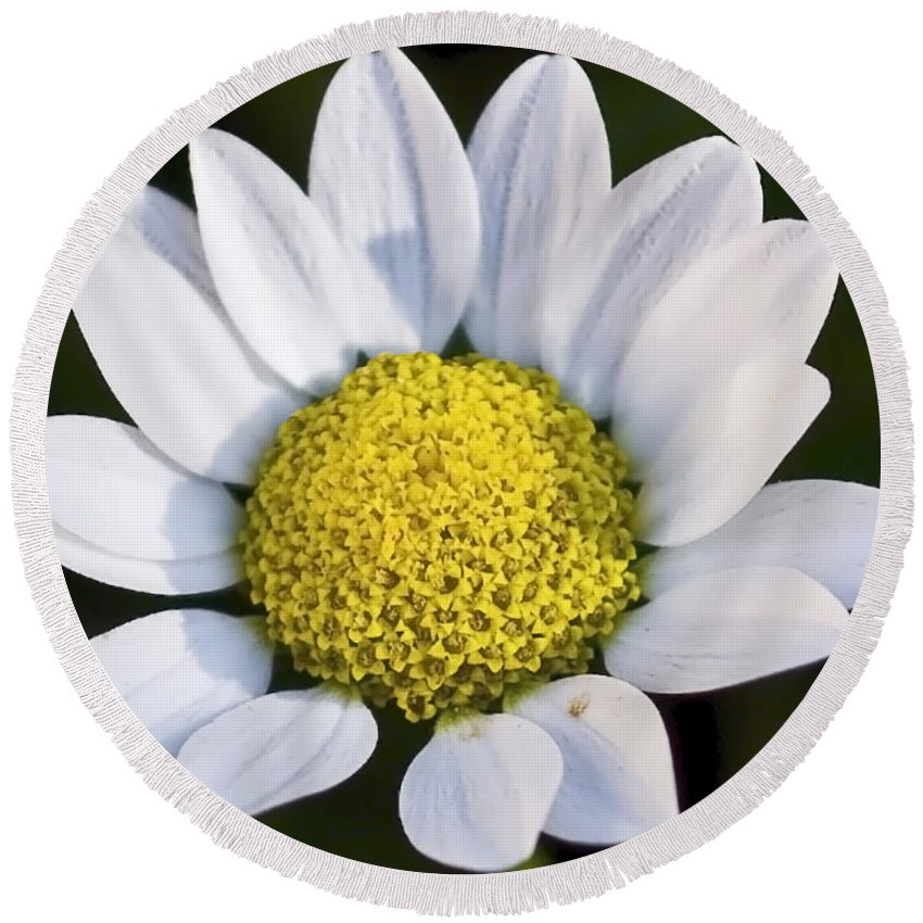 Flowers Round Beach Towel featuring the photograph Daisy by Svetlana Sewell