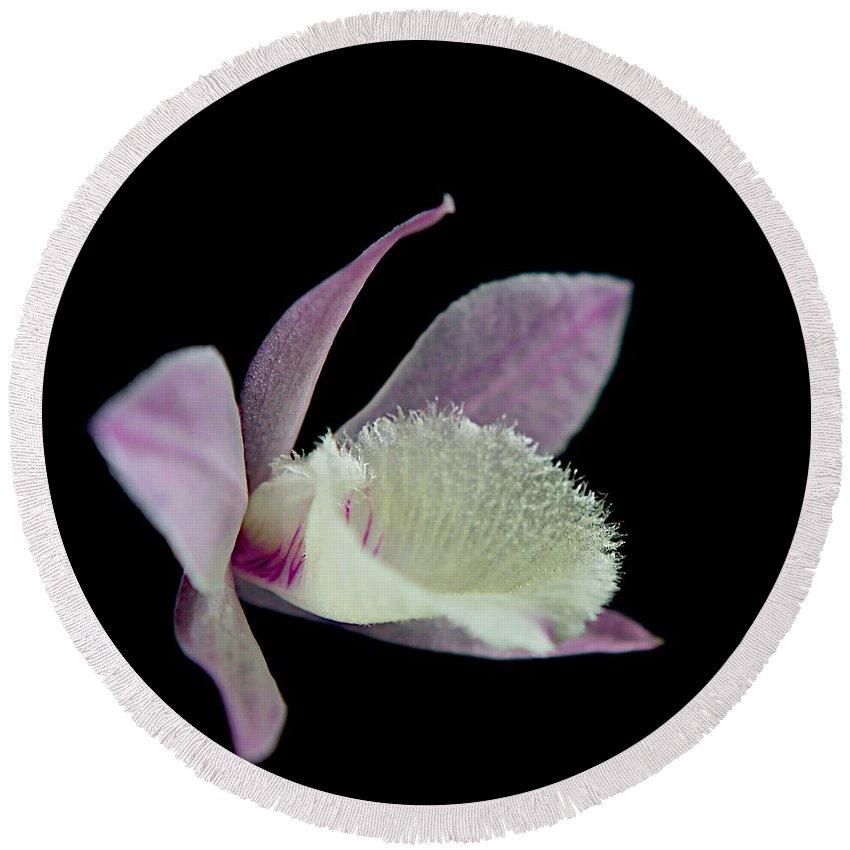 Orchids Round Beach Towel featuring the photograph Dendrobium Orchid by MingTa Li