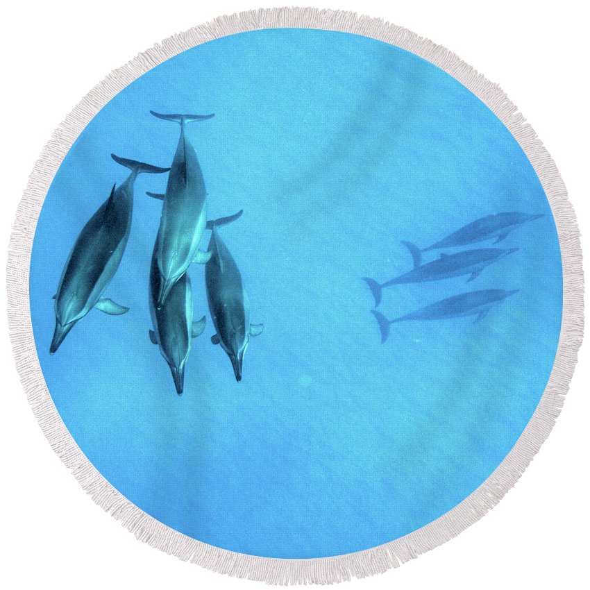 Hawaii Dolphins Underwater Round Beach Towel featuring the photograph Dolphins At Rest by DeWaine Tollefsrud