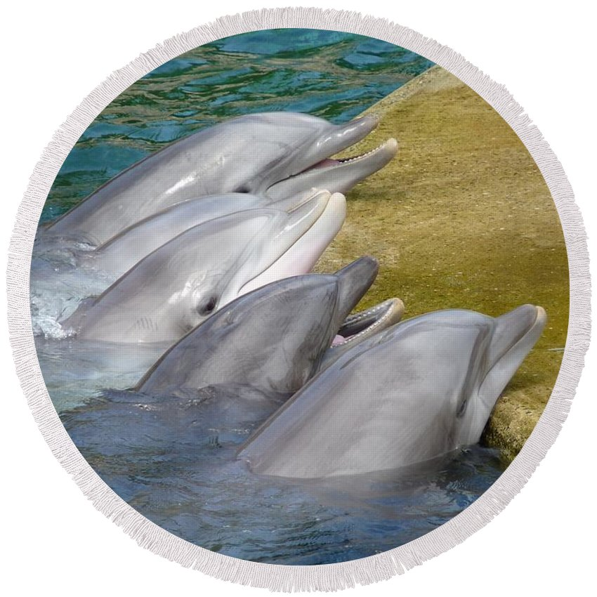 Fish Round Beach Towel featuring the photograph Dolphins by FL collection