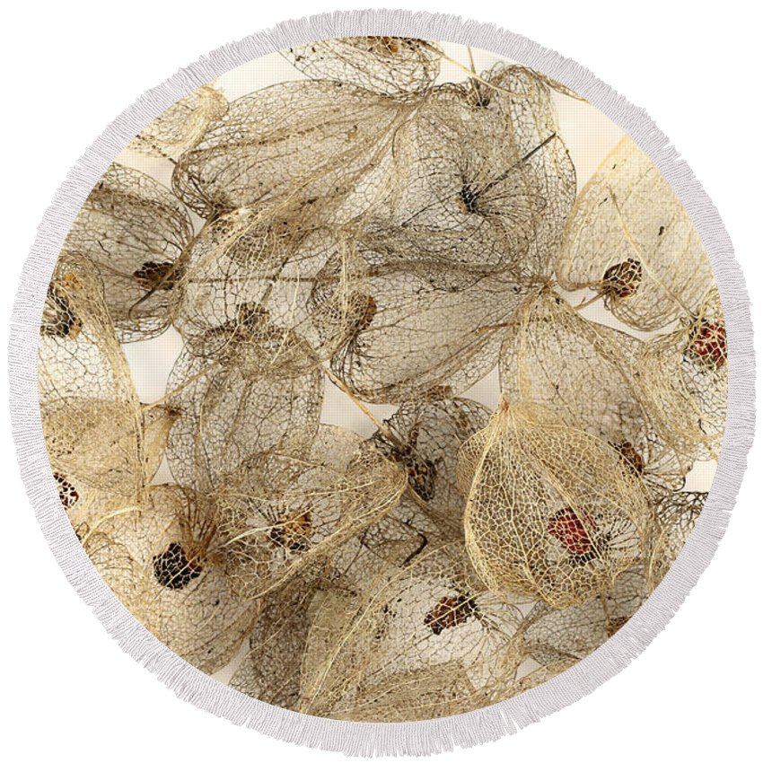 Dried Round Beach Towel featuring the photograph Dried Fruits Of The Cape Gooseberry by Michal Boubin